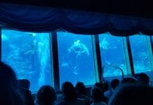 Weeki Wachee Mermaid Show Underwater Theatre in Florida